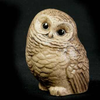 Poole baby owl